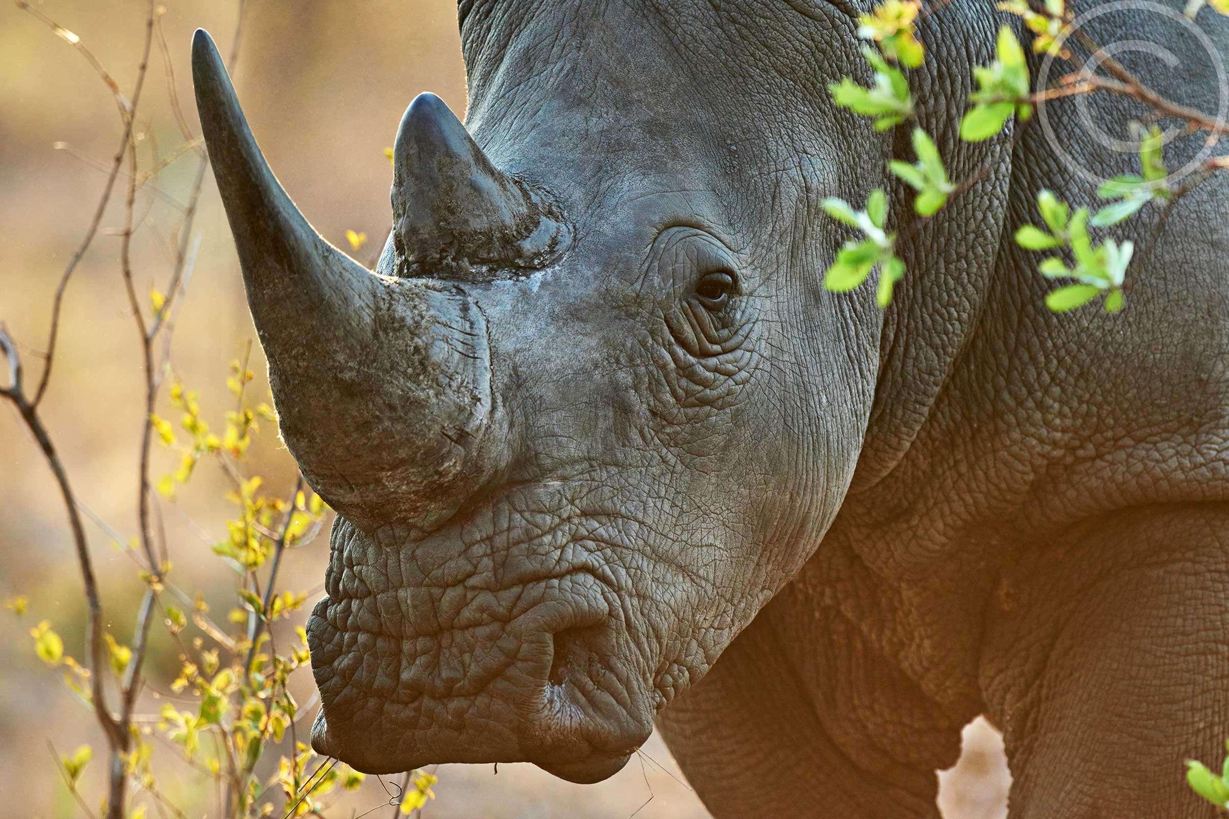 Save Endangered Animals